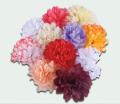 Crizanteme mici