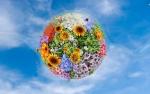 Pamant - ingrasamant de flori - decor