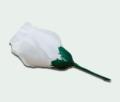 Trandafir boboc
